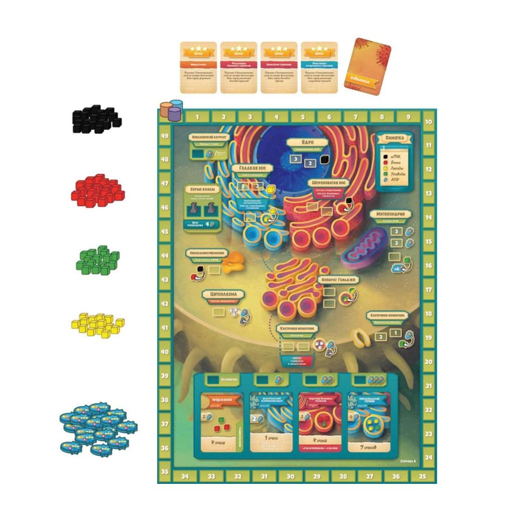 Микромир. Биология клетки (Cytosis: a Cell Biology Game)